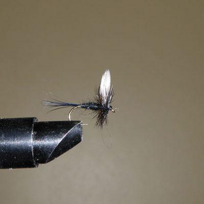 Black-Gnat