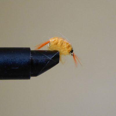 Shrimp Orange