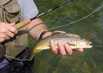 Trout Fishing Ireland   Fly Fishing Ireland